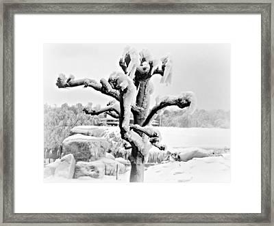 White Mink Framed Print by Cathy Dunlap