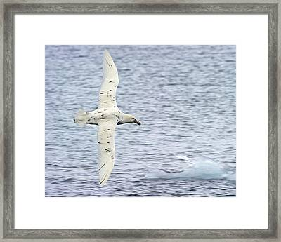 White Nelly Framed Print by Tony Beck