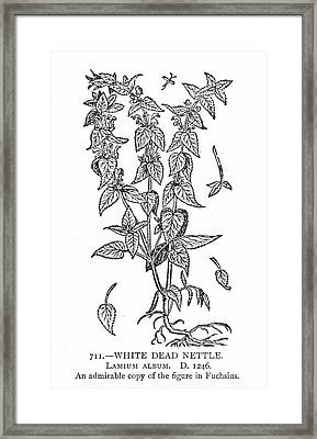 White Nettle Framed Print by Granger