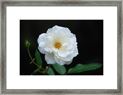 Framed Print featuring the photograph White On Black by Kathy Gibbons