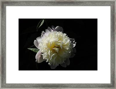 White On Black Peony Framed Print