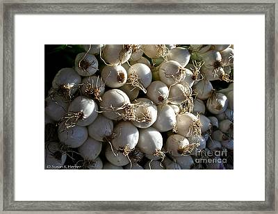 White Onions Framed Print by Susan Herber