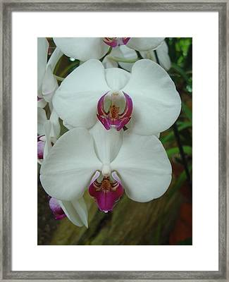 Framed Print featuring the photograph White Orchid by Charles and Melisa Morrison