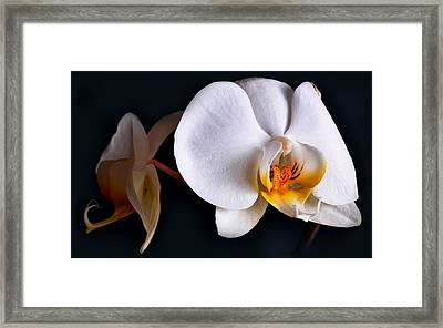 White Orchid Framed Print by Dorothy Walker
