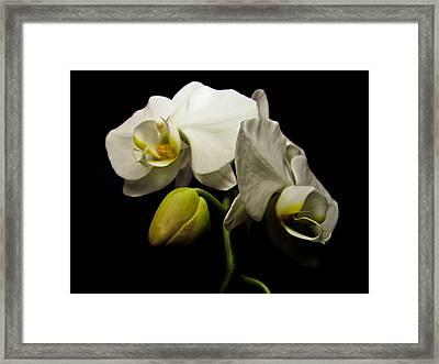 White Orchid I Framed Print