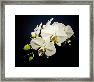 White Orchid IIi Framed Print