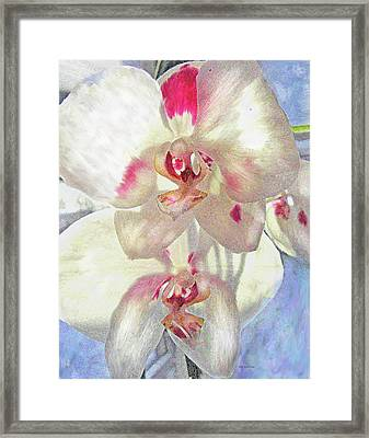 White Orchid Framed Print by Jane Schnetlage