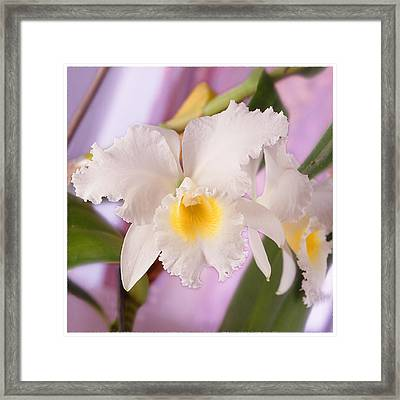 White Orchid Framed Print by Mike McGlothlen
