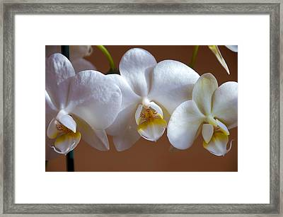 White Orchid  Framed Print by Svetlana Sewell