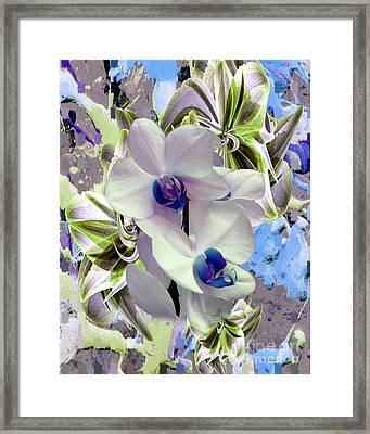 White Orchids And A Touch Of Blue Framed Print by Doris Wood