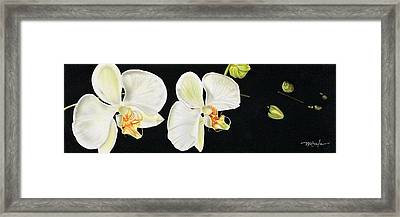 Framed Print featuring the painting White Orchids by Dan Menta