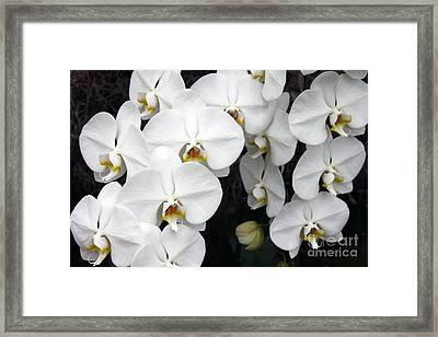 Framed Print featuring the photograph White Orchids by Debbie Hart