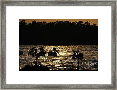 Framed Print featuring the photograph White Pelican Evening by Dan Friend