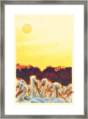 Framed Print featuring the photograph White Pelicans In Sun by Dan Friend