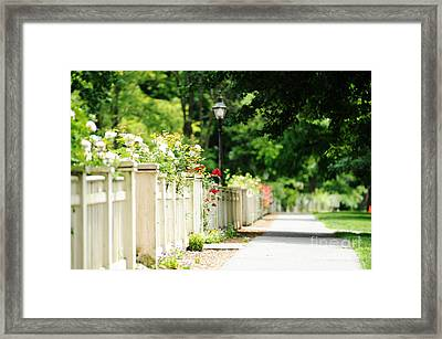 White Picket Fence And Roses Framed Print by HD Connelly