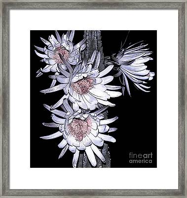 White Pink Cereus Flowers - Digital Art Framed Print by Dolores Root