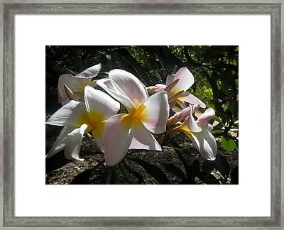 Framed Print featuring the digital art White Plumeria by Vicky Tarcau