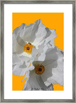 White Poppies On Yellow Framed Print by Betty Northcutt