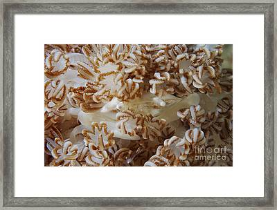 White Porcelain Crab In Beige Soft Framed Print by Mathieu Meur