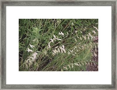 White Reeds Framed Print