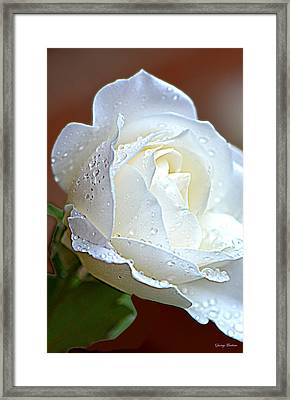 Framed Print featuring the photograph White Rose 005 by George Bostian