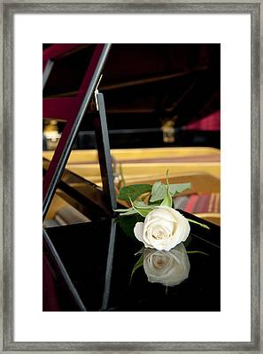 White Rose And Its Reflection Framed Print by Corepics