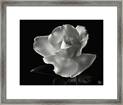 White Rose In Black And White Framed Print by Endre Balogh