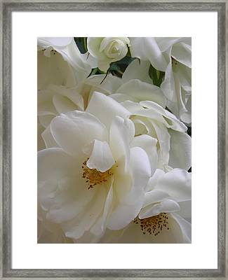 White Rose Medley Framed Print by Tina Ann Byers