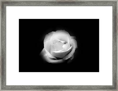 Framed Print featuring the photograph White Rose Petals by Anthony Rego