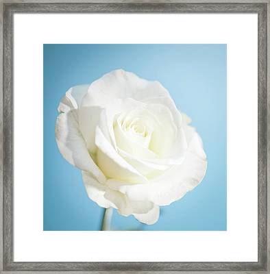 White Rose Framed Print by Peter Chadwick LRPS