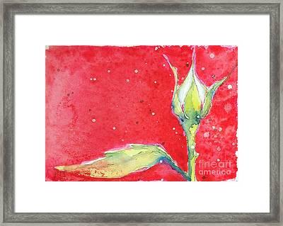 White Rosebud Framed Print