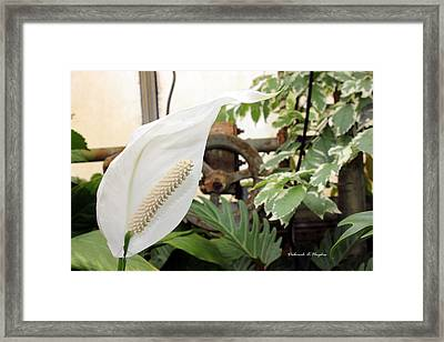 White Rust Framed Print