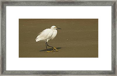White Seabird Walking Framed Print