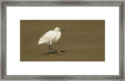 White Seabird Walking Framed Print by Barbara Middleton