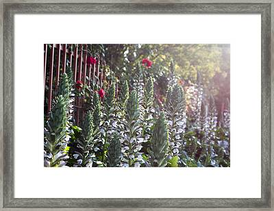 White Spike Orchids Framed Print by Denice Breaux