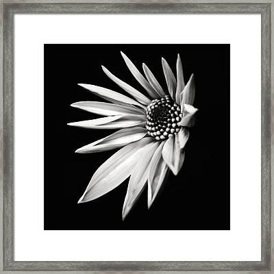 White Star Framed Print by Jaromir Hron