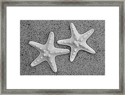 White Starfish In Black And White Framed Print by Sandi OReilly