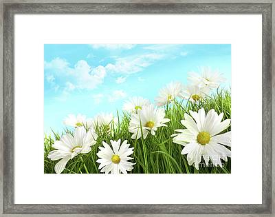 White Summer Daisies In Tall Grass Framed Print by Sandra Cunningham