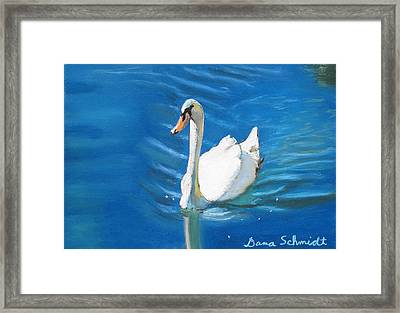 White Swan At Lake Eola Of Orlando Framed Print