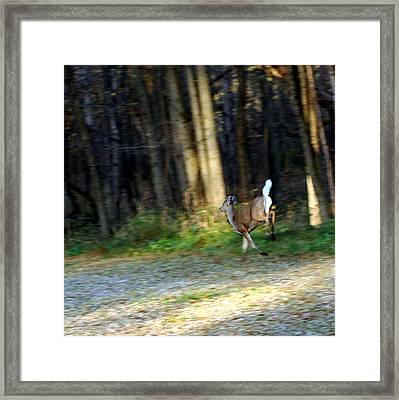 White Tail Running Deer Framed Print by LeeAnn McLaneGoetz McLaneGoetzStudioLLCcom