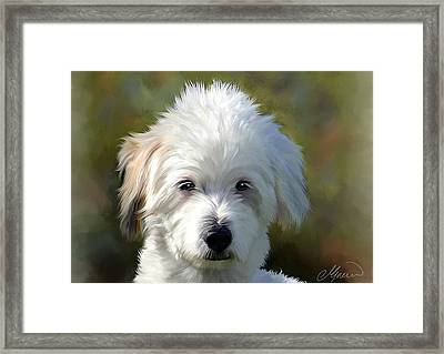 White Terrier Dog Portrait Framed Print by Michael Greenaway