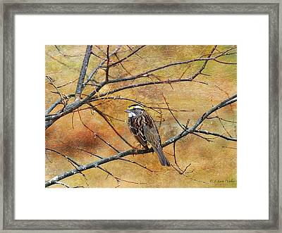 White-throated Sparrow Tweeting Framed Print