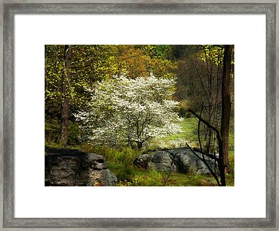 White Tree On The Mountain Framed Print