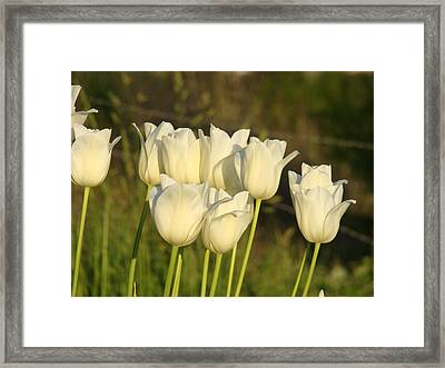White Tulip Flowers Art Prints Spring Green Garden Framed Print by Baslee Troutman
