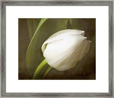 white Tulip Framed Print by Fiona Messenger