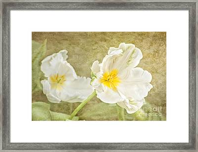 White Tulips Framed Print by Cheryl Davis