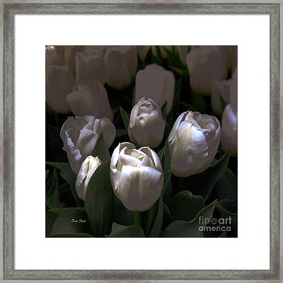 White Tulips Framed Print by Dale   Ford