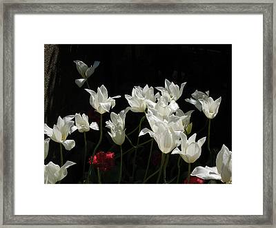 White Tulips On Black Framed Print