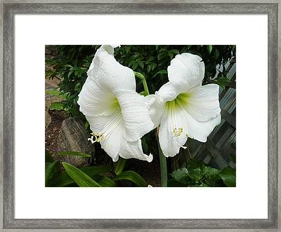 White Twins Framed Print