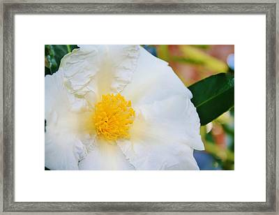 White W Yellow Center Flower Framed Print